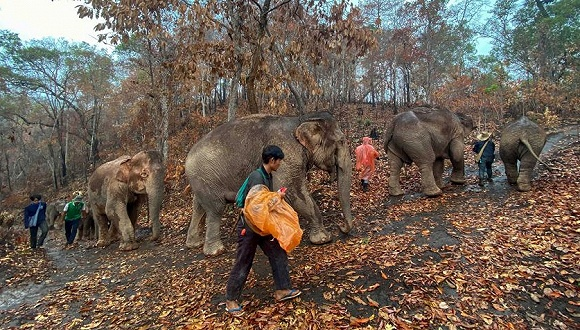 图片来源:保护大象基金会