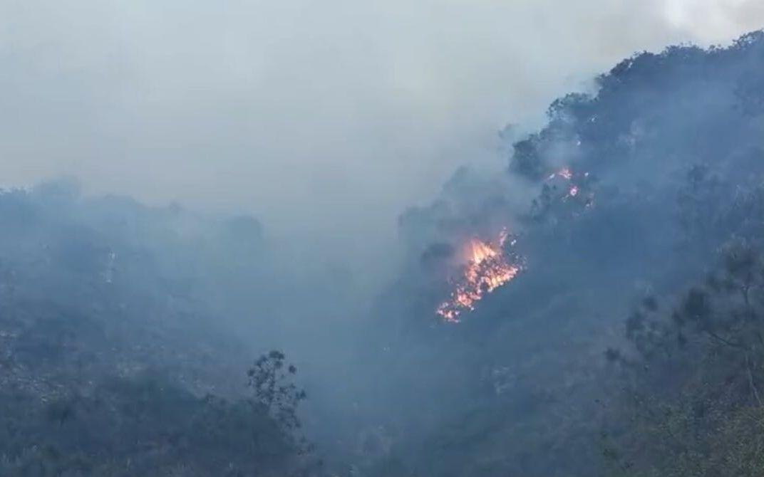 凉山摩天注册森林火灾现场风力较大增,摩天注册图片