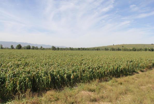 有机旱作农业示范片区