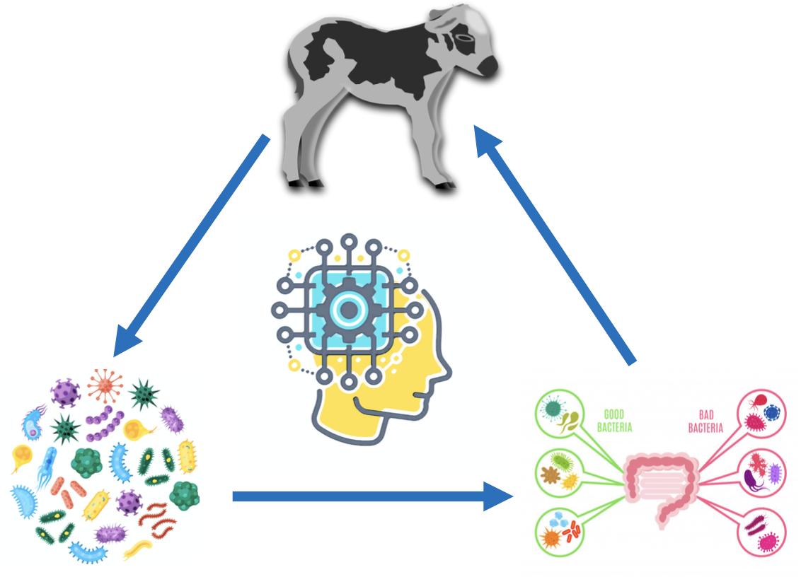 天富牛羊羔腹天富泻后死亡率高科学家用AI图片