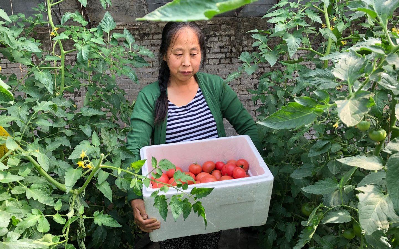 工作人员采摘下当天需要送出的蔬菜。受访者供图