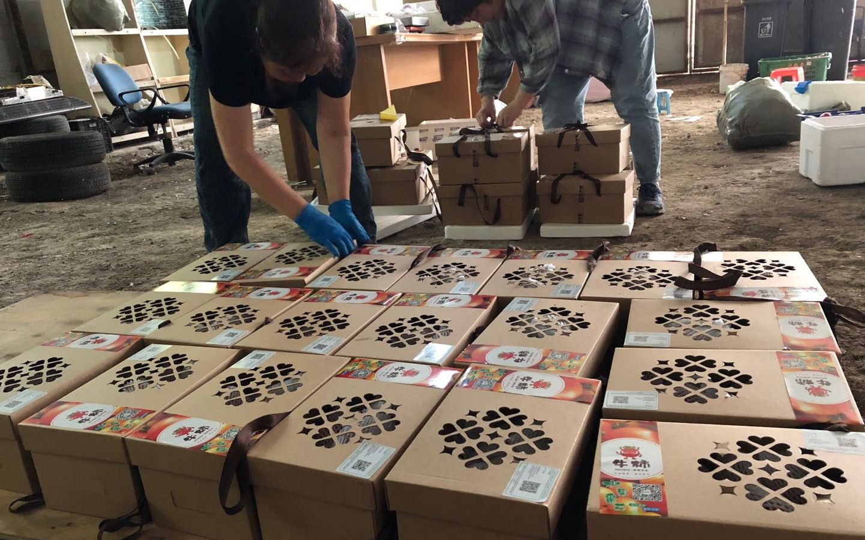工人正在将采摘下来的蔬菜装盒。受访者供图