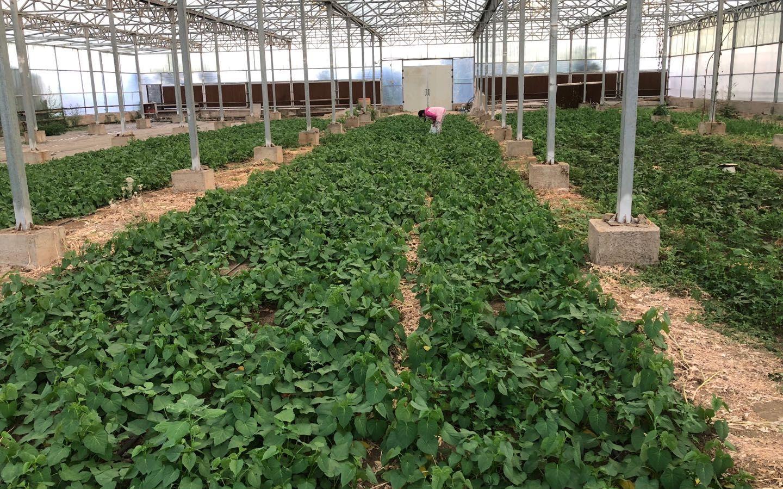 北京绿控基地蔬菜直送居民家中 销售量系平时5倍图片