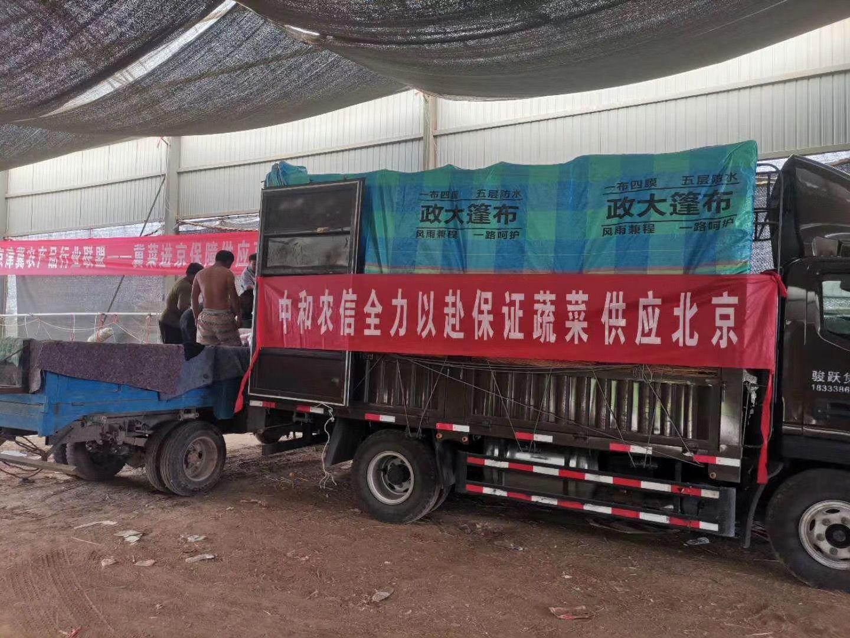 4天内,京津冀农产物行业同盟调运1400吨蔬菜抵京。尹作丰 摄