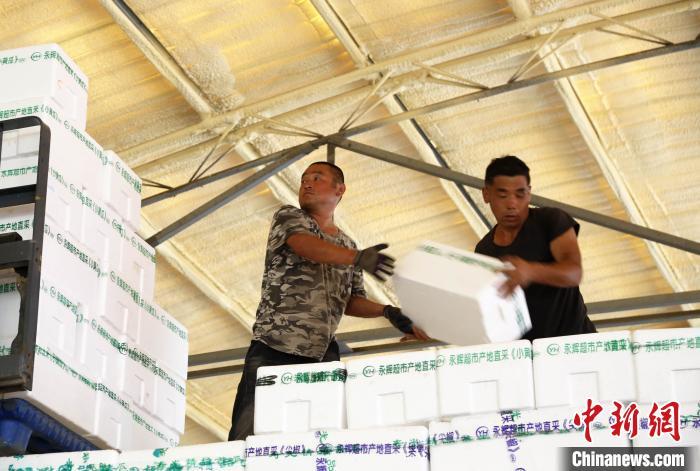 摩天注册:北京蔬菜供摩天注册应地山东寿光菜图片