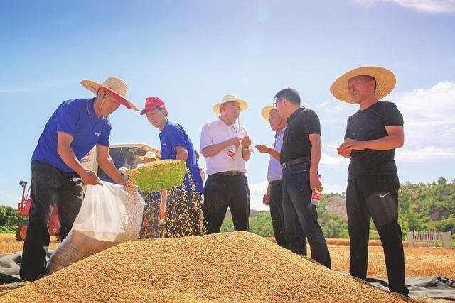 翼城冬小麦刷新全省单产历史最高纪录