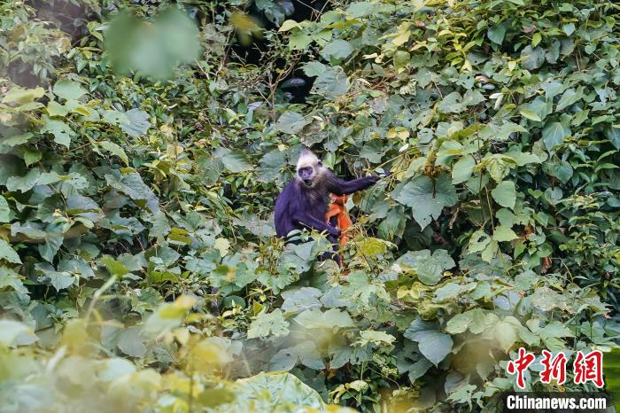 广西强化野生动物保护 野生陆栖脊椎动物总数居全国第3