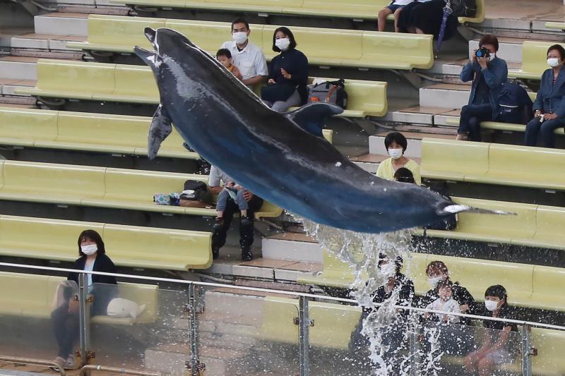 图说:6月1日,在日本横滨八景岛海洋乐园,观看海豚表演的游客保持间距就坐。日本于6月1日恢复全国大多数地区经济活动,位于横滨的八景岛海洋乐园于当日起重新开放。