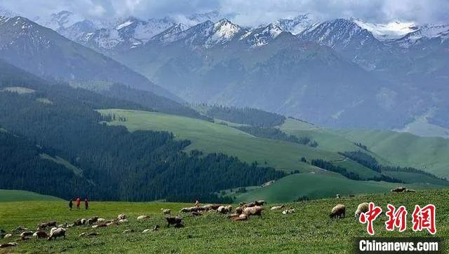 山西省大同市灵丘县空中草原。 山西省林业和草原局供图