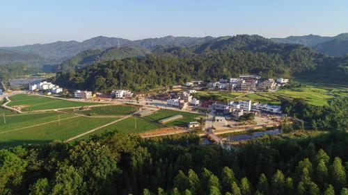 广东大力发展林下经济 开辟林业扶贫致富路径