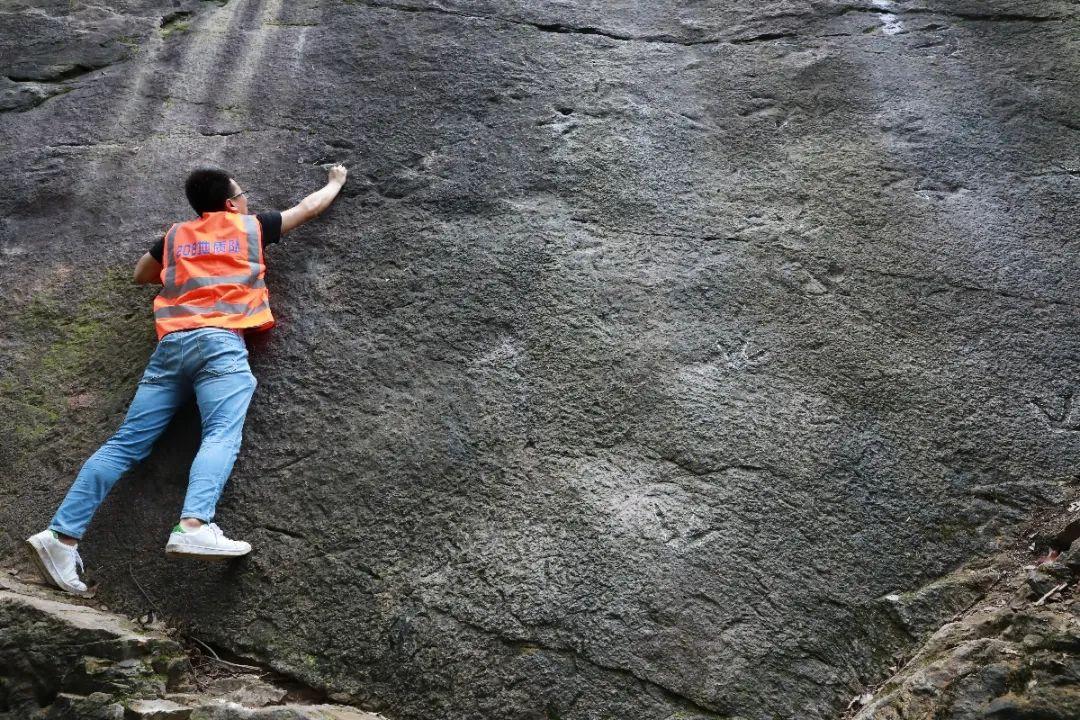 重磅发现!侏罗纪早期最强肉食恐龙曾出没重庆城区