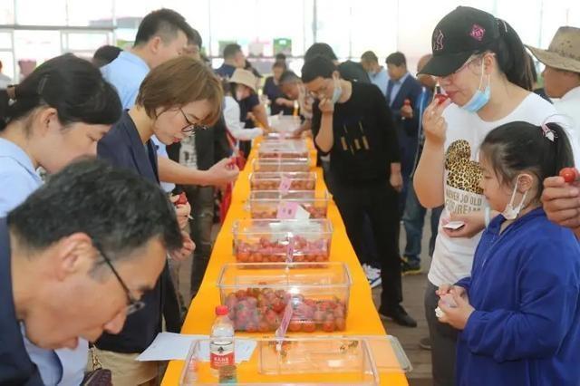 """集齐""""龙珠"""",召唤好吃的番茄!来看市民为浦东番茄直播""""带盐"""""""
