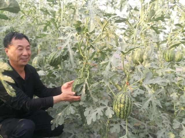 """朗陵""""空中西瓜""""上市 新春家庭农场甜蜜开园"""