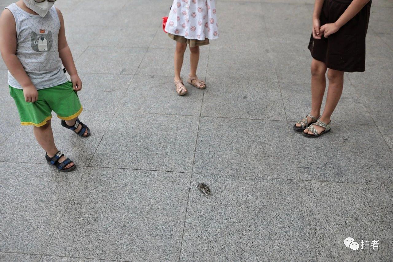 △6月20日,一位小朋友給寵物倉鼠放風時吸引了小區里的其他孩子圍觀。