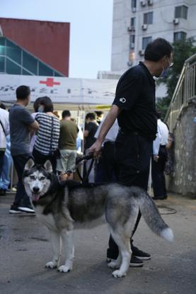 下楼遛狗的清闲,人们顺带过来列队领号。《中国谋划报》记者郝成摄