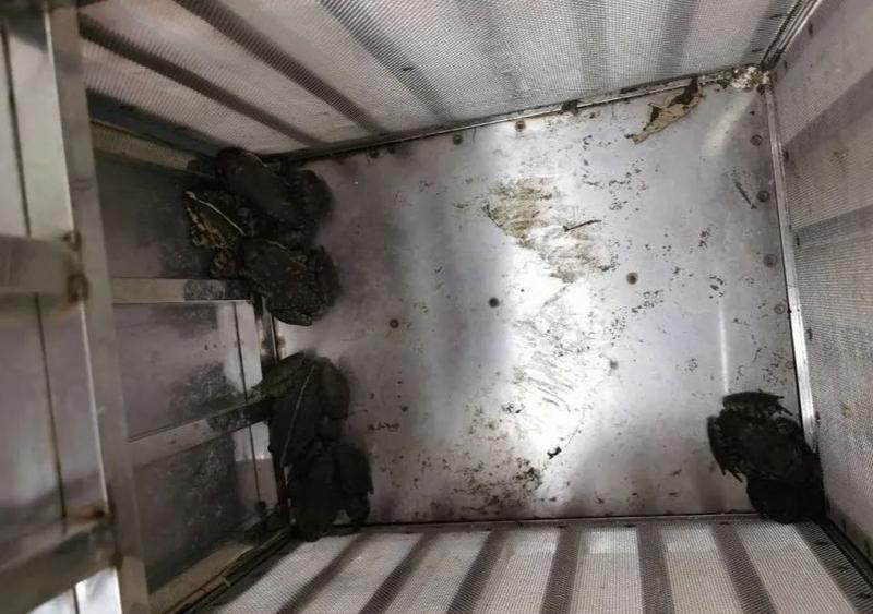 """梅州两男子捕杀""""石怪""""涉嫌非法狩猎罪被刑拘,何为""""石怪""""?"""