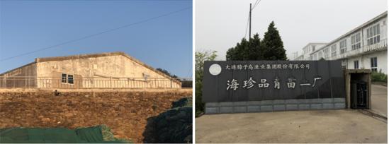 ▲左图为育苗一厂,右图为育苗二厂 新京报记者 肖玮 摄