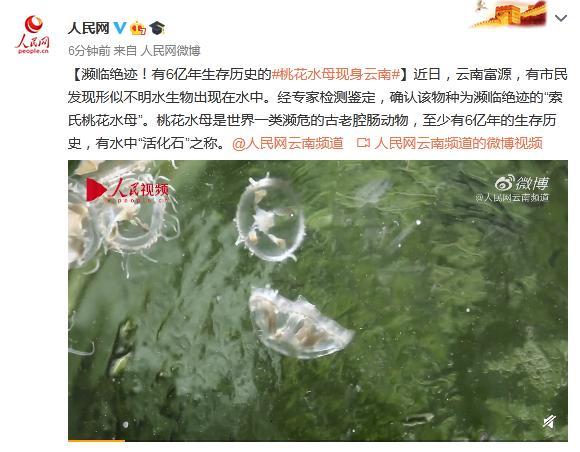 濒临绝迹!有6亿年生存历史的桃花水母现身云南