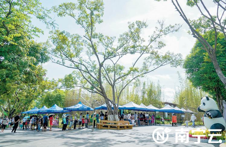 在南宁市动物园,游客有序排队进入大熊猫苑,文明旅游成为一道靓丽的风景。记者叶子榕 摄