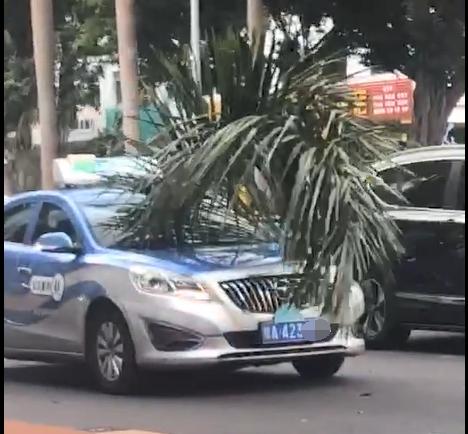 """吓人!海口一出租车行驶中被刺穿挡风玻璃,""""凶手""""竟是……(视频)"""