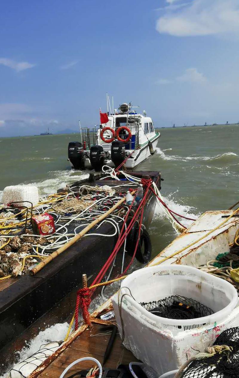 南海休渔期严禁出海捕捞,广州南沙将1000多斤生蚝放生大海