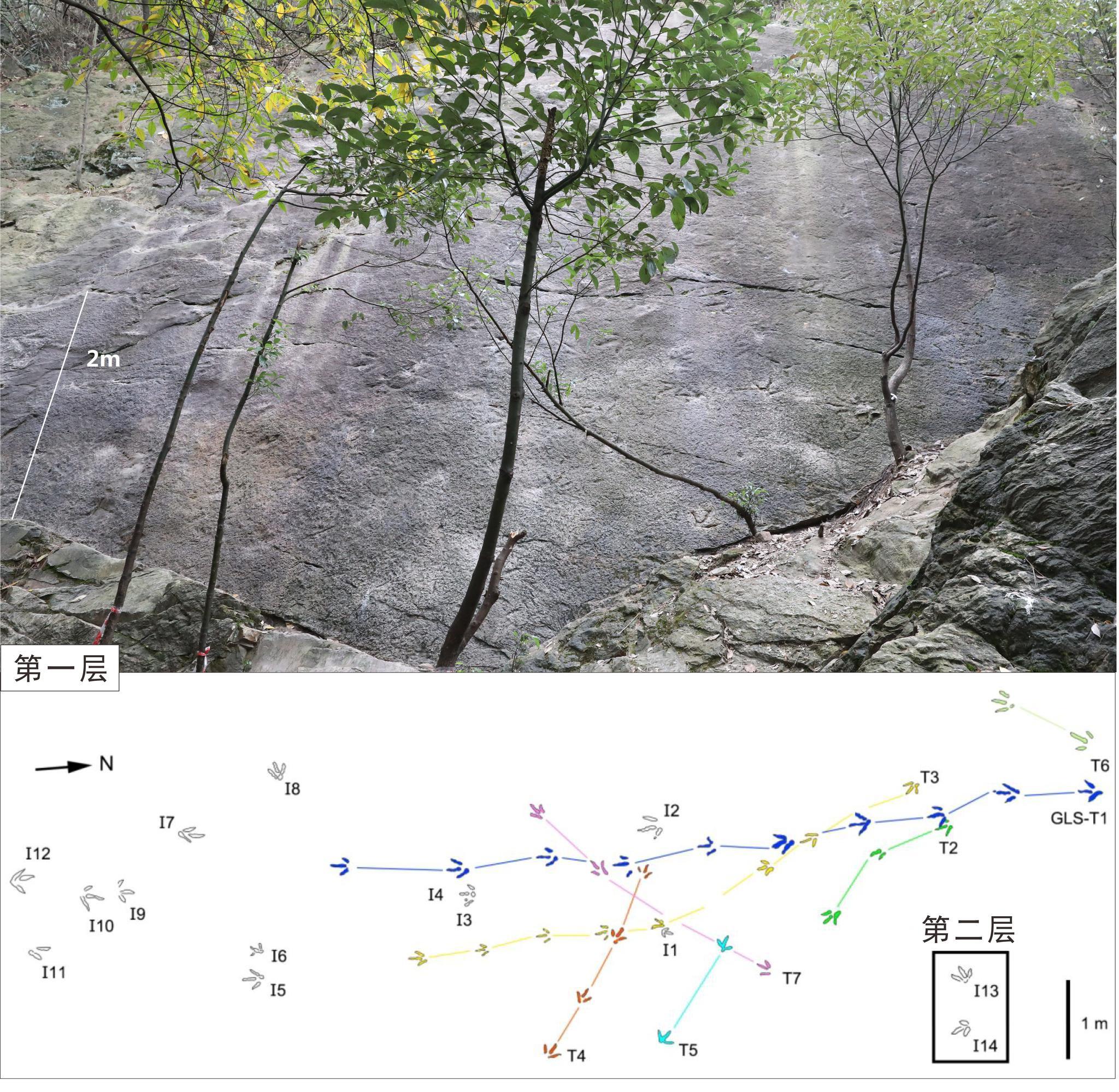 """重庆歌乐山发现侏罗纪卡岩塔足迹,""""制迹者""""或为中国龙图片"""