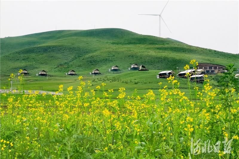 河北丰宁:草原生态保护有成效