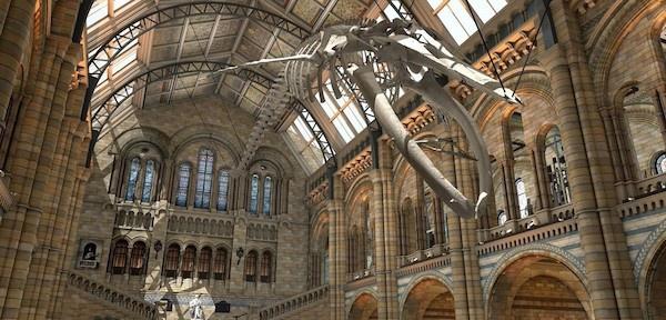 道格·古尔将出任英国自然历史博物馆新馆长,有危机也有挑战