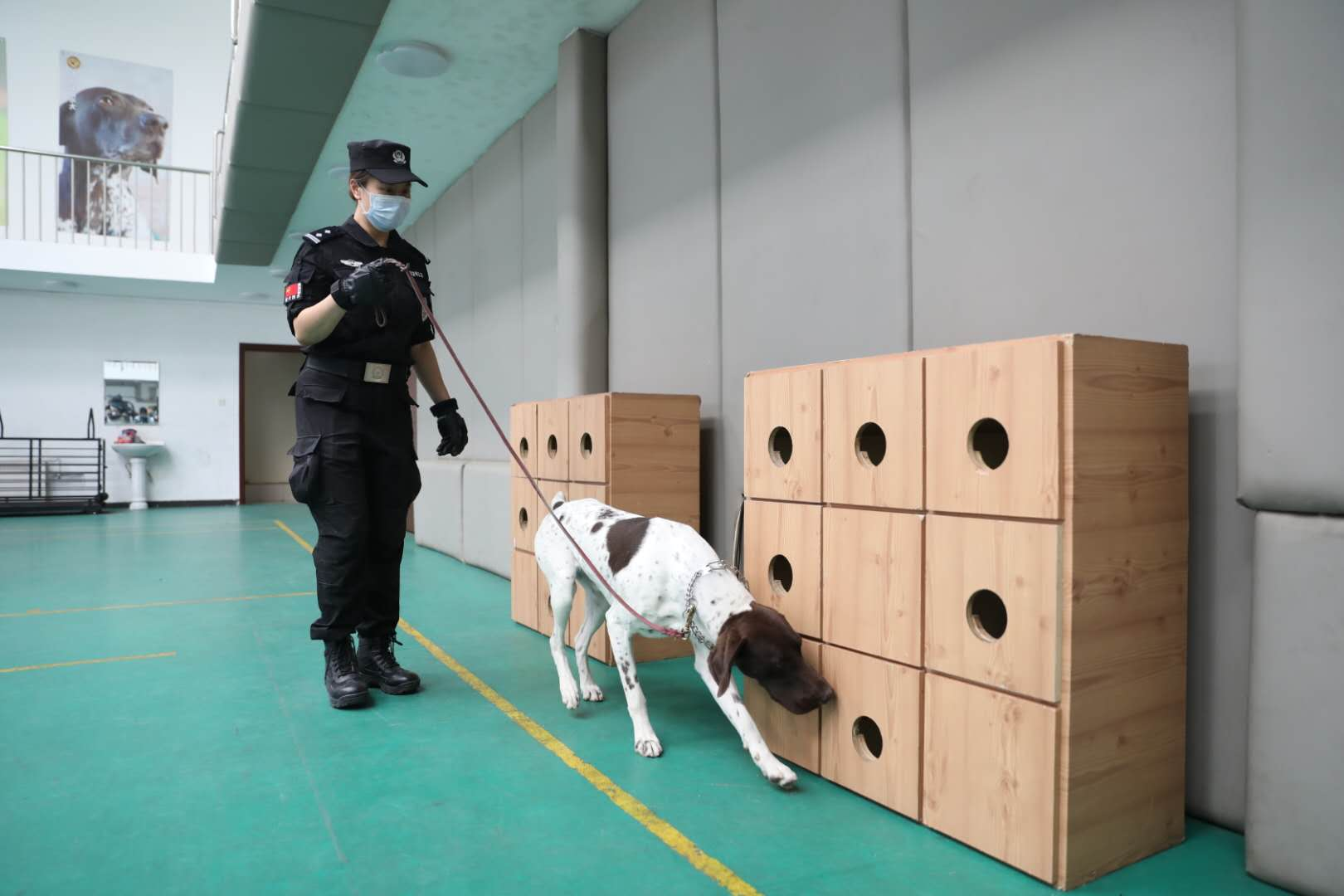 民警带领警犬在可疑物附近搜索。新京报记者 王飞 摄