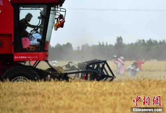 """""""物联网+""""农机装备助力河北3305万亩小麦""""开镰"""""""