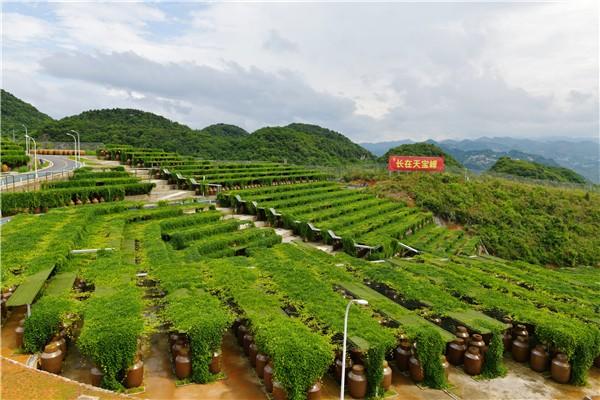 http://www.edaojz.cn/jiaoyuwenhua/682104.html
