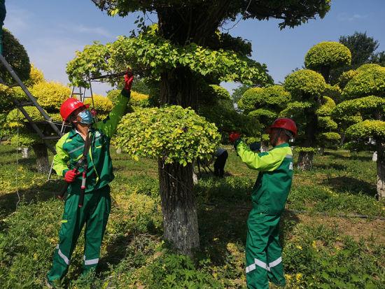 """园林绿化行业工装的设计主题是""""绿波风"""