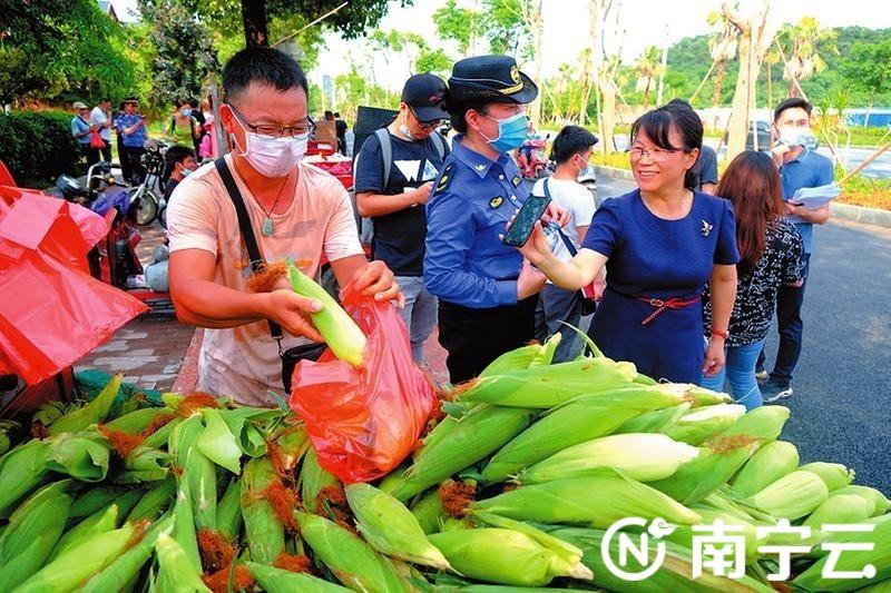 五象大道果蔬临时摆卖点,市民选好玉米后刷手机付款。