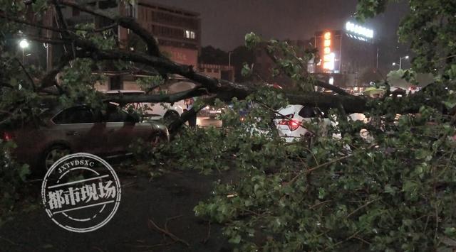 事发新余!暴雨浇倒10米高大树,3辆小车遭了殃