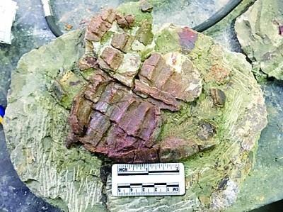 世界级恐龙化石群不断显现未解之谜