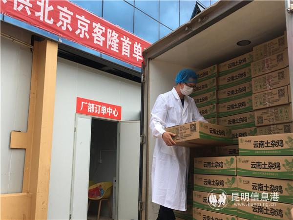 """昆明农特产品""""进京"""" 1200只土鸡销往北京"""