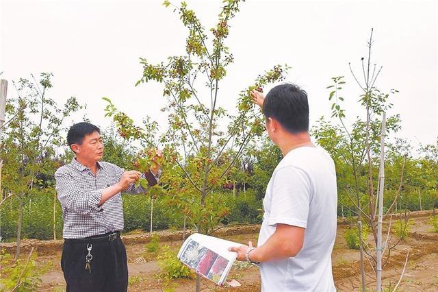 冀州一农场成河北省首家参与制定地方行业标准苗木企业