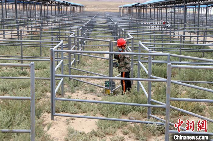 新疆将新增一座活畜交易市场 预计年交易额可达50亿元