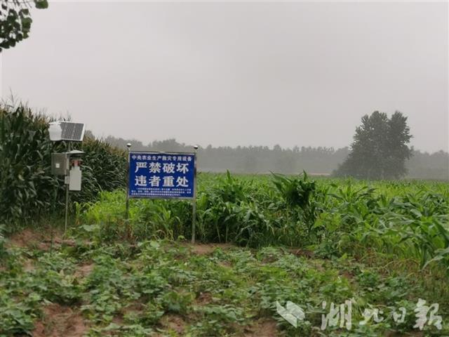 湖北省开展农作物重大病虫害防控培训