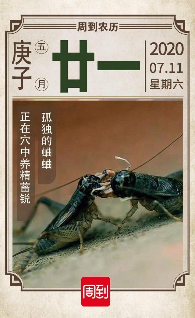 农历中国 | 五月廿一 · 蟋蟀居宇