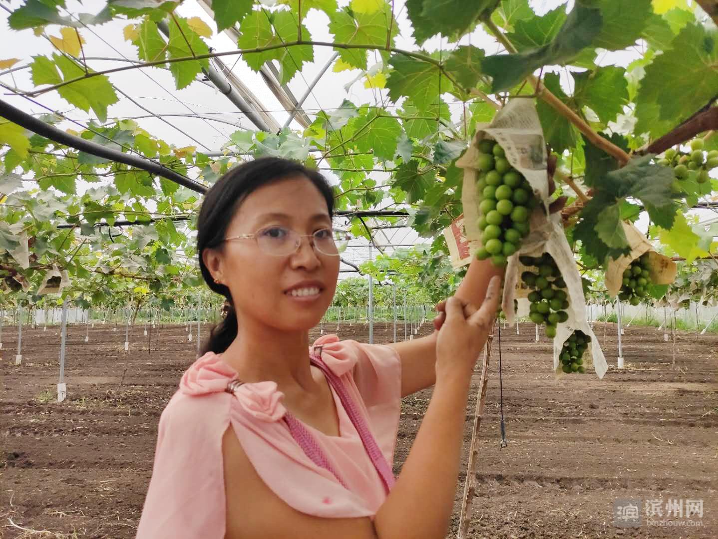 """""""喝矿泉水""""长大的葡萄树结果了!博兴曹王镇与中国农科院合力打造优质葡萄种植区"""