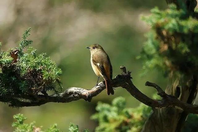 风声雨声蛙鸣声蟋蟀声……身在浦东,聆听西湖!
