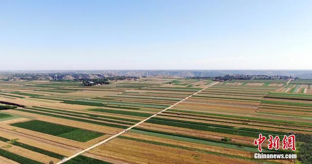 """黄土高原夏粮收割 20万余万亩冬小麦""""颗粒归仓"""""""