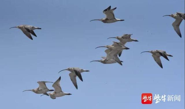 野生植物有1500余种,鱼类超200种,还发现了震旦雅雀……连云港摸底家门口的动植物
