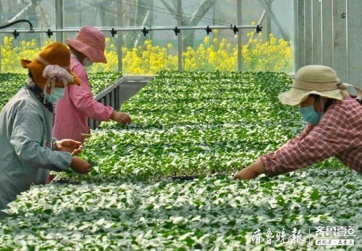 枣庄市西王庄镇:特色产业带动 助推精准扶贫