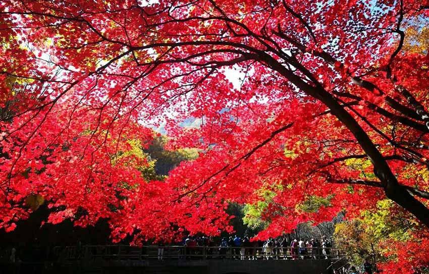 本溪关门山:秋天赏枫夏季避暑 各番景象别有洞天