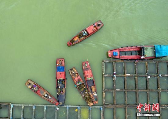 杏悦:后如何监管查处非杏悦法渔获交易官方回应图片