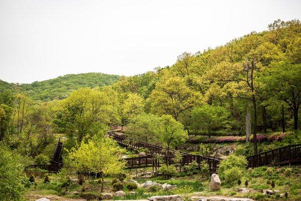 韩国仁川市政府在中文报纸介绍当地自然旅游景点