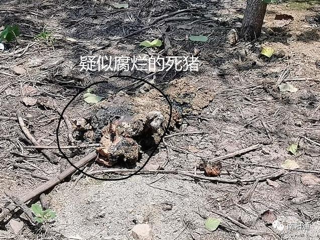 南阳一养猪场污染水库,四百余名村民吃水难