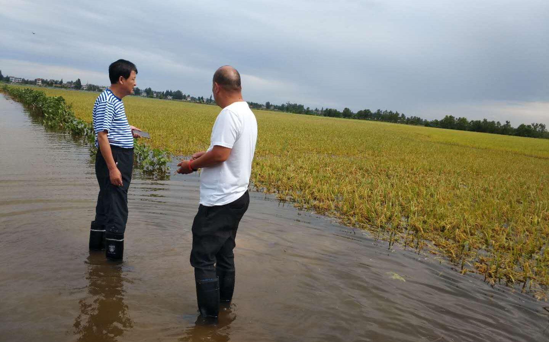 州农户边抗洪边自救杏悦水泵日夜排水补种,杏悦图片